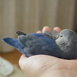 鳥フォトコンテスト「くぅ」さん