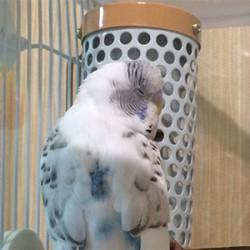 鳥フォトコンテスト「ヒーちゃん」さん