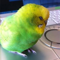 鳥フォトコンテスト「HARU」さん