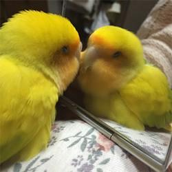 鳥フォトコンテスト「ゆずぽん」さん