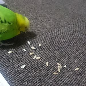鳥フォトコンテスト「なる」さん