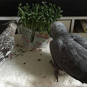 鳥フォトコンテスト「モグ・ミリ」さん