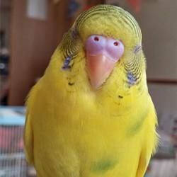 鳥フォトコンテスト「たま」さん