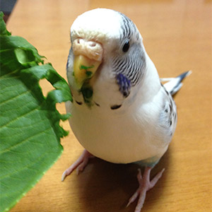 鳥フォトコンテスト「まめちゃん」さん