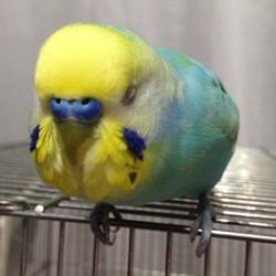 鳥フォトコンテスト「キウイ」さん