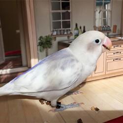 鳥フォトコンテスト「きり」さん