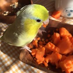 鳥フォトコンテスト「パンプキン」さん
