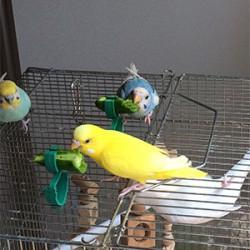 鳥フォトコンテスト「キラ・ルナ・ナナ」さん