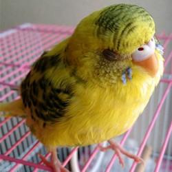 鳥フォトコンテスト「豆」さん