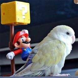 鳥フォトコンテスト「とら」さん