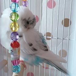 鳥フォトコンテスト「ぐら」さん