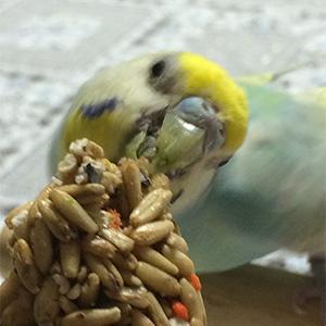 鳥フォトコンテスト「ナナちゃん」さん