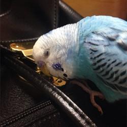 鳥フォトコンテスト「そうちゃん」さん