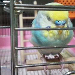 鳥フォトコンテスト「ソラ」さん