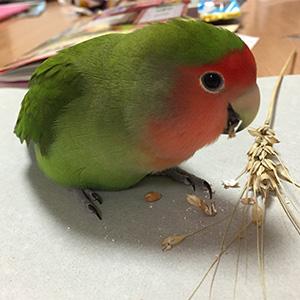 鳥フォトコンテスト「ひなげし」さん