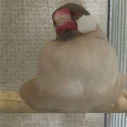鳥フォトコンテスト「ルル」さん