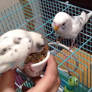 鳥フォトコンテスト「ユキたん・杏仁」さん