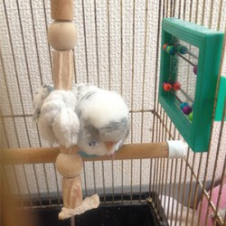 鳥フォトコンテスト「ここ」さん