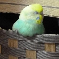 鳥フォトコンテスト「きょろちゃん」さん