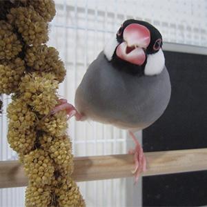 鳥フォトコンテスト「りん」さん