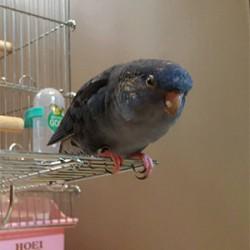 鳥フォトコンテスト「波平」さん