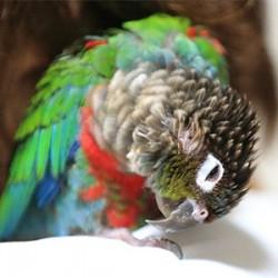 鳥フォトコンテスト「ウロ」さん