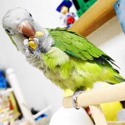 鳥フォトコンテスト「ハロ」さん