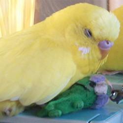 鳥フォトコンテスト「ピッチ」さん