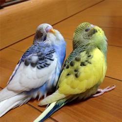 鳥フォトコンテスト「ビター・チョコ」さん