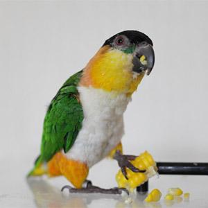 鳥フォトコンテスト「クロちゃん」さん