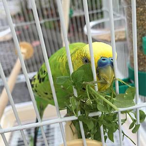 鳥フォトコンテスト「ぽぽ」さん