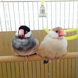 鳥フォトコンテスト「ごま・きなこ」さん