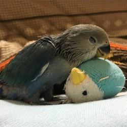 鳥フォトコンテスト「あお」さん