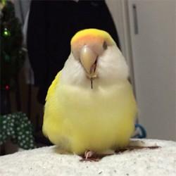 鳥フォトコンテスト「ラムネ」さん