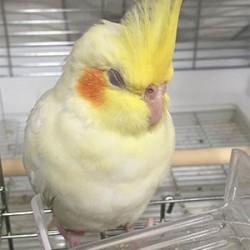 鳥フォトコンテスト「チノ」さん