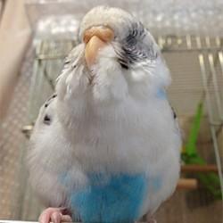 鳥フォトコンテスト「ピタ」さん