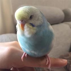 鳥フォトコンテスト「あめ」さん