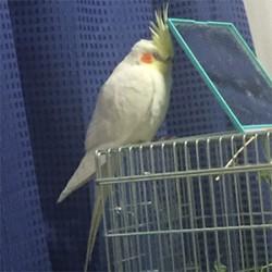 鳥フォトコンテスト「柚子」さん