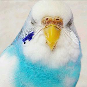 鳥フォトコンテスト「しょーちゃん」さん