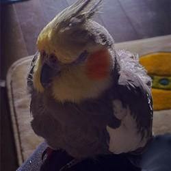 鳥フォトコンテスト「コロン」さん