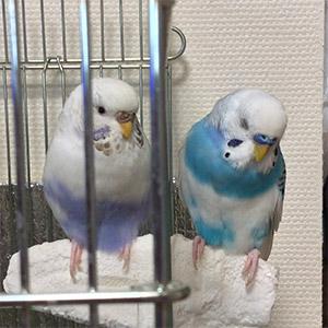 鳥フォトコンテスト「ちゃちゃ・らんちゃん」さん