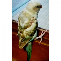 鳥フォトコンテスト「音」さん