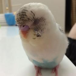 鳥フォトコンテスト「タラちゃん」さん