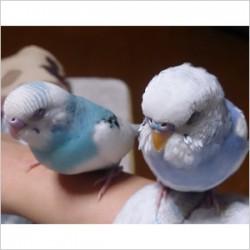 鳥フォトコンテスト「モンちゃん・アンちゃん」さん