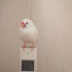 鳥フォトコンテスト「ふく」さん