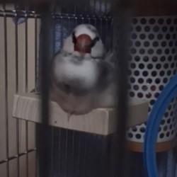 鳥フォトコンテスト「アポロ」さん