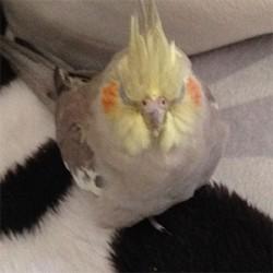 鳥フォトコンテスト「ネネ」さん
