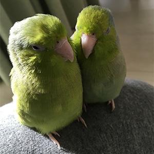 鳥フォトコンテスト「マメ・ウメ」さん
