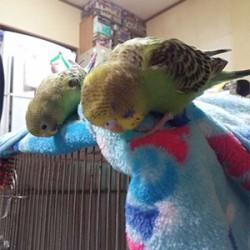 鳥フォトコンテスト「くるる・まり」さん