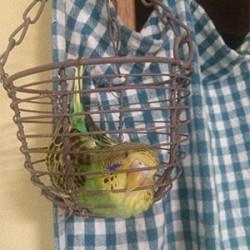 鳥フォトコンテスト「かりん」さん